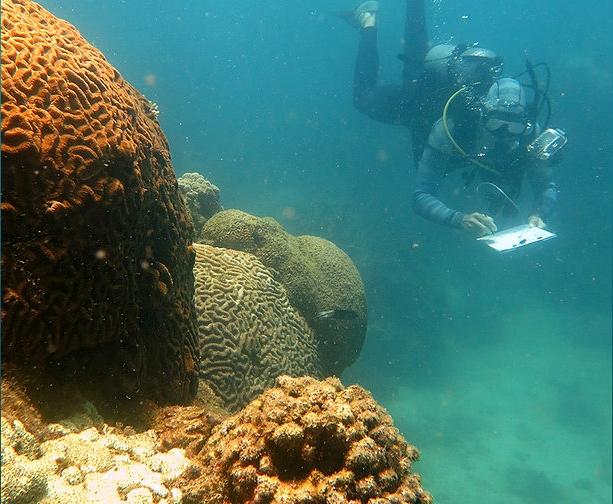 Reef Restoration Foundation