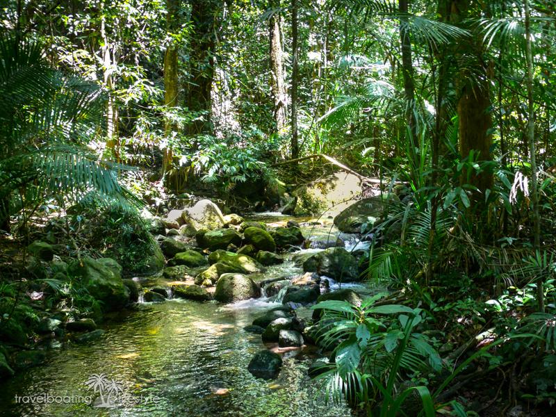 Wet Tropics rainforest Queensland | Thala Beach Nature Reserve